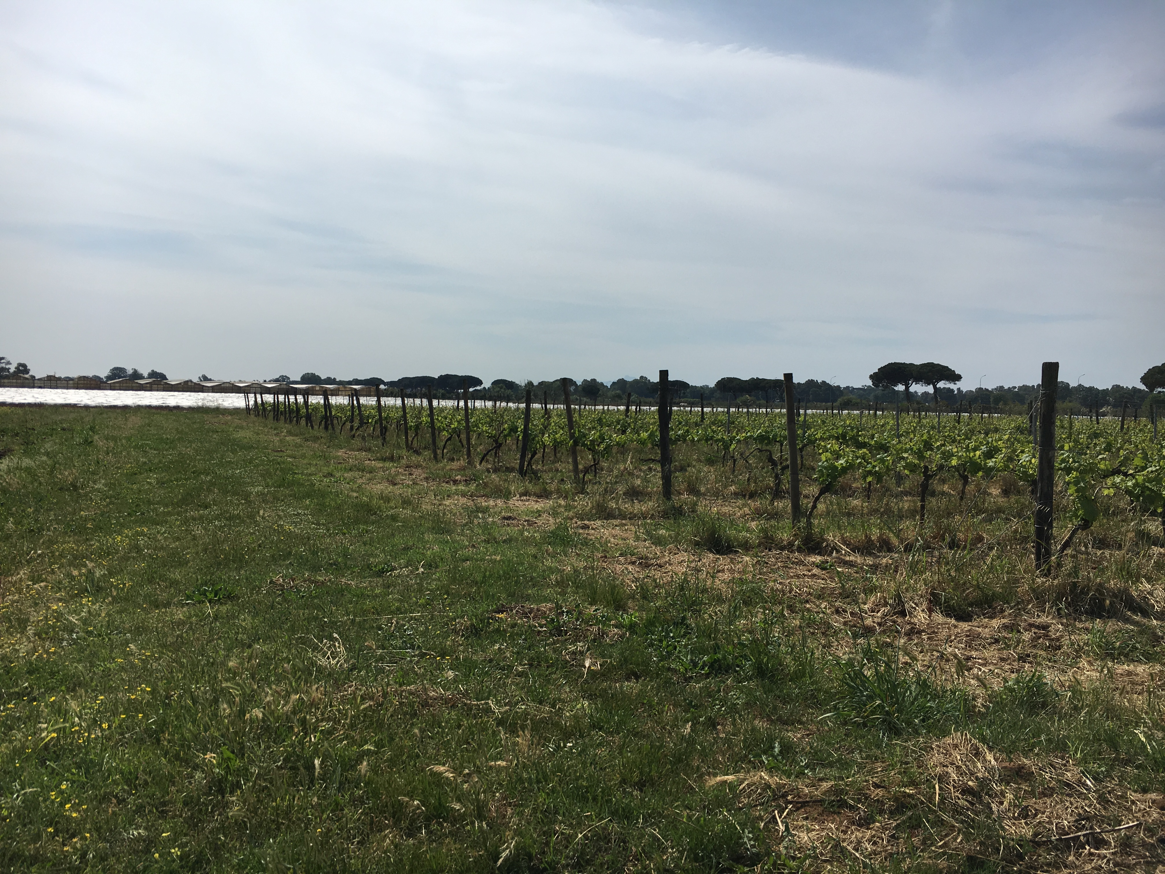 An Italian Vineyard #divatravel
