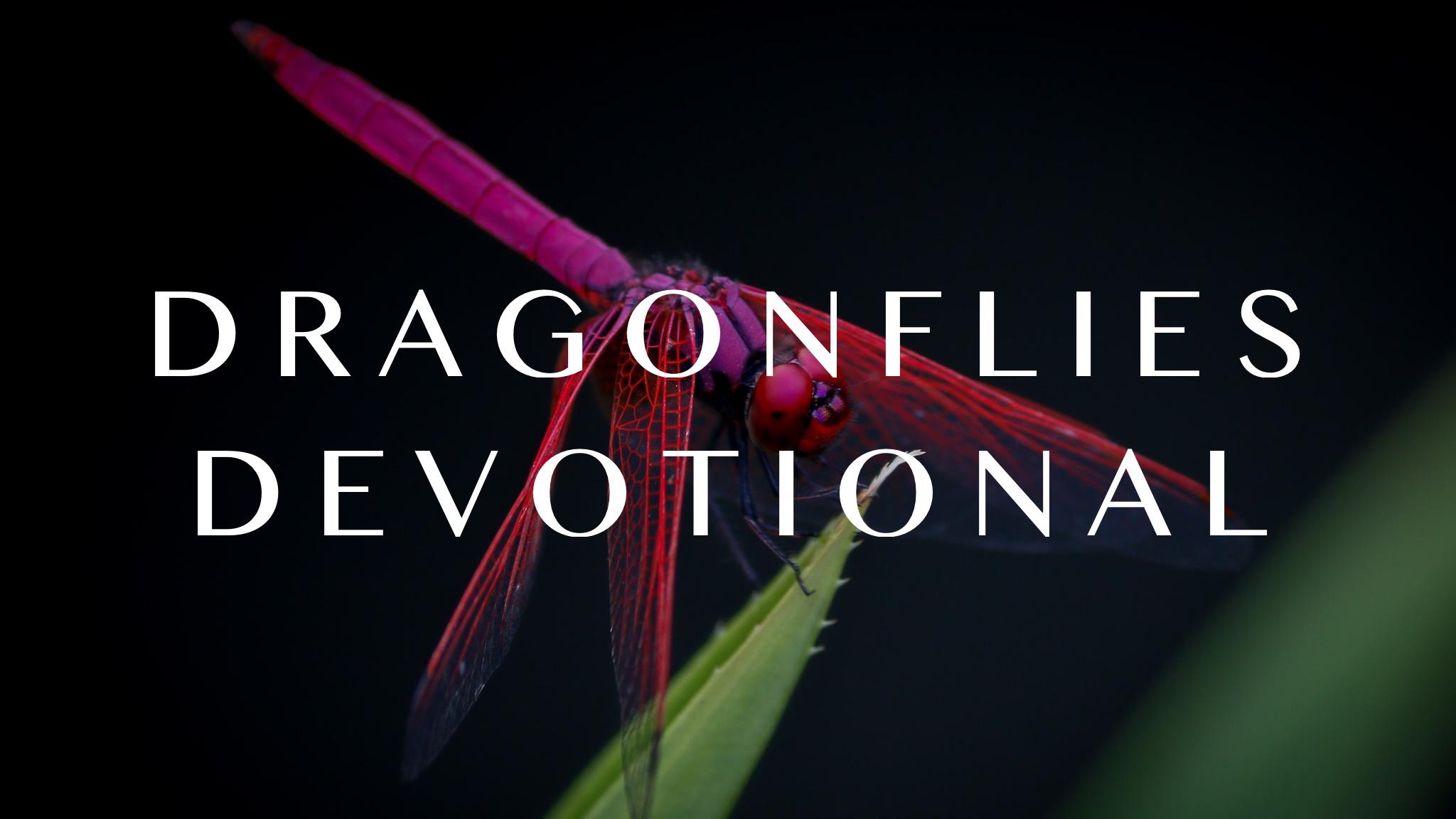 Dragonflies – Fall 2020